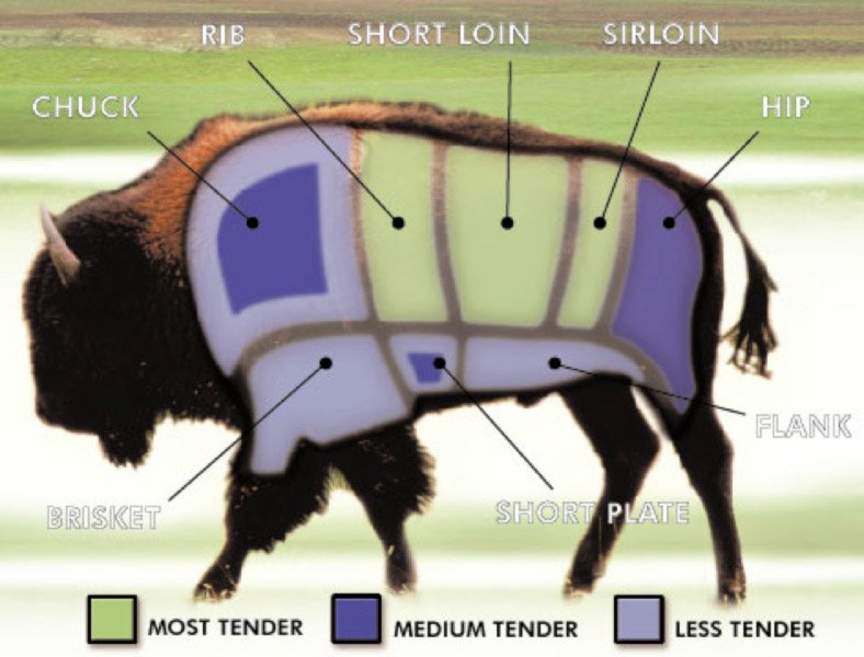 bison_diagram