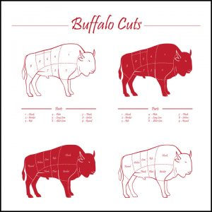 bison meat cuts illustration